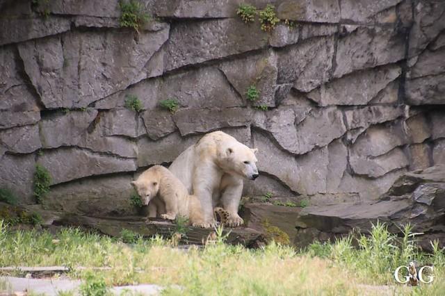 Besuch Tierpark Friedrichsfelde 15.06.201916