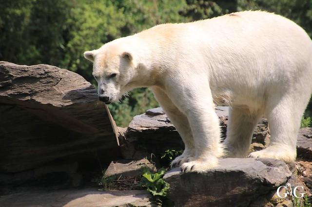 Besuch Tierpark Friedrichsfelde 15.06.201976