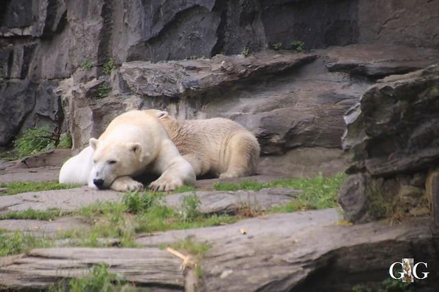 Besuch Tierpark Friedrichsfelde 15.06.201911