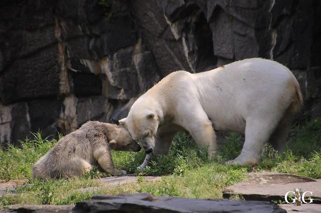 Besuch Tierpark Friedrichsfelde 15.06.201985