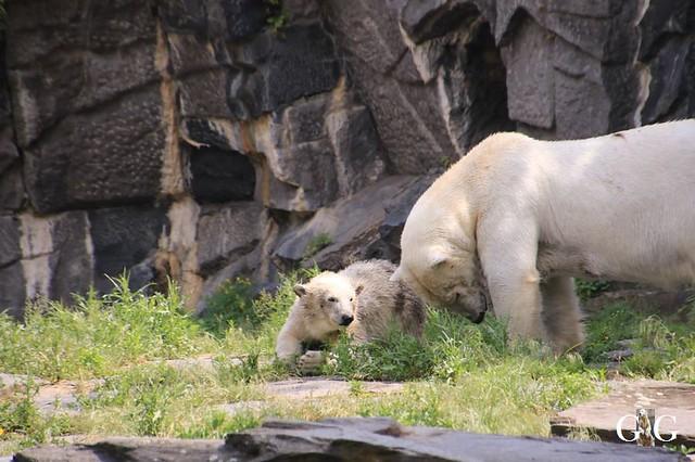 Besuch Tierpark Friedrichsfelde 15.06.201989