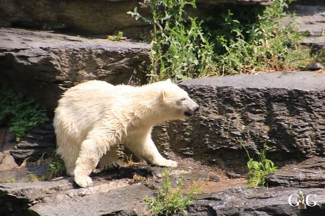 Besuch Tierpark Friedrichsfelde 15.06.201975