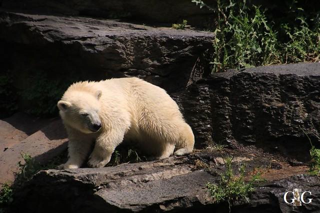 Besuch Tierpark Friedrichsfelde 15.06.201974