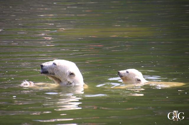 Besuch Tierpark Friedrichsfelde 15.06.201964