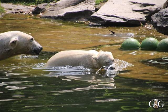 Besuch Tierpark Friedrichsfelde 15.06.201961