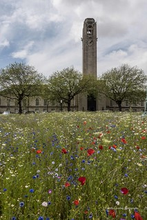 Wildflowers in front of the Guildhall 2019 06 15 #6