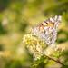 Ƹ̵̡Ӝ̵̨̄Ʒ  Butterfly Invasion  Ƹ̵̡Ӝ̵̨̄Ʒ