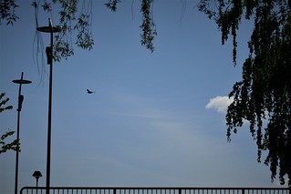 solitary flight across the bridge