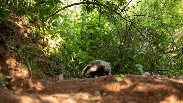 Badger pre sunset, wide angle