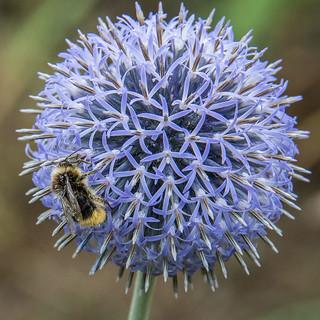 BEWARE - BEE AT WORK