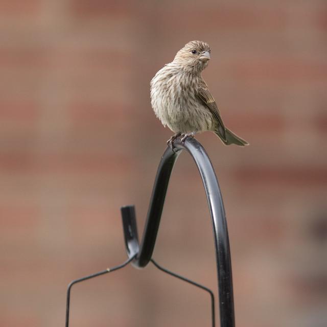 Backyard Bird Watching