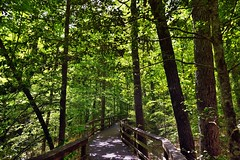 I Want You to Walk With Me; We Can Figure Out Where We're Going Later… (Congaree National Park)