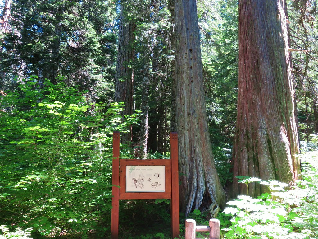 Interpretive sign along the Old Growth Trail