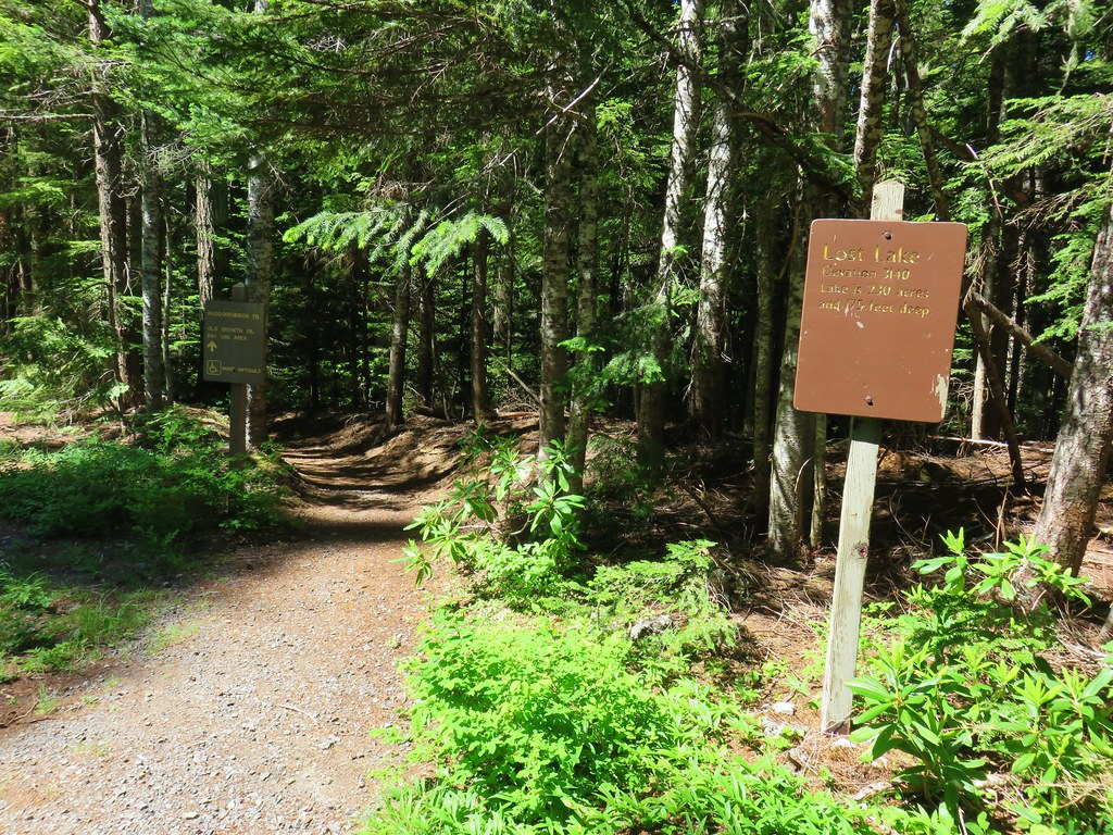 Rhododendron Trail to the Old Growth Trail