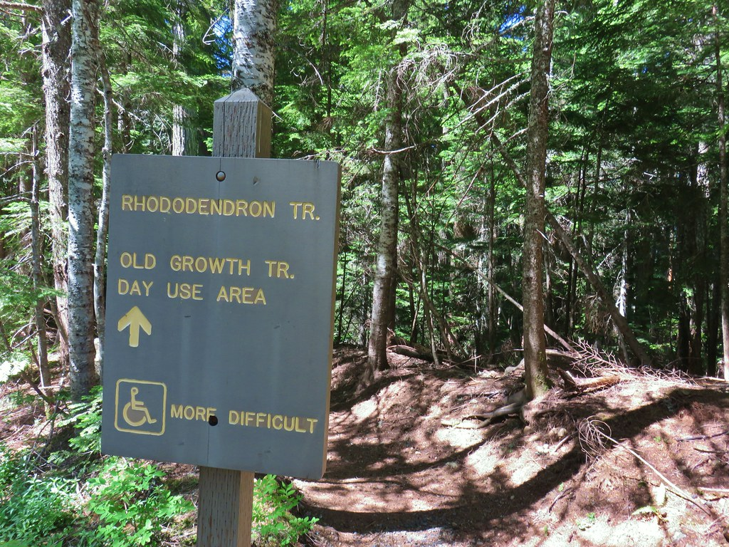 Rhododendron Trail