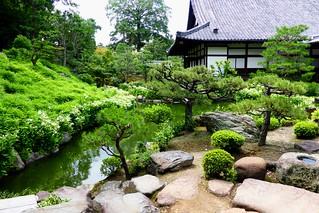 Ryosoku-in, Garden -2 (July 2013)