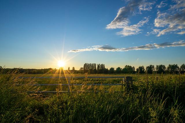Sun and field