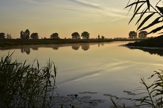 Heute Morgen an der Alten Treeneschleife; Süderhöft, Nordfriesland (78)