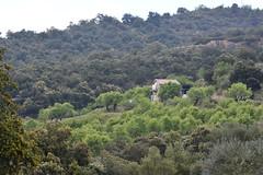 Una casita rodeada de almendros. Huesca