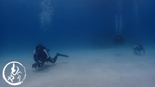 ダイバーも気持ちよさそうに泳いでました♪♪