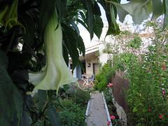 ALAIOR. MENORCA. El jardín. 12