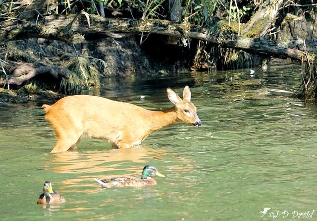 Un petit bain avec les canards 2