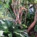 ALAIOR. MENORCA. El jardín. 6