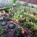 ALAIOR. MENORCA. El jardín. 7