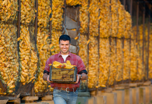 Farmer with corn cobs