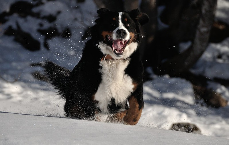 lady chien