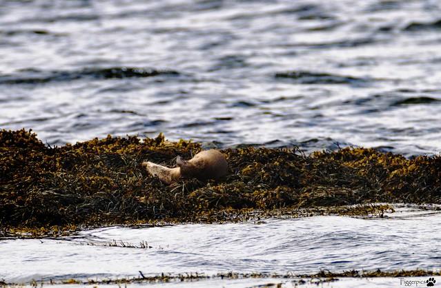 Otterfun