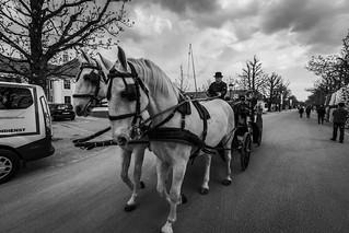 Carriage at Schönbrunn Palace 馬車 美泉宮 熊布朗宮