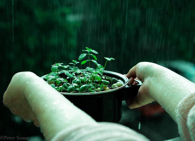 Life has grown in the rain