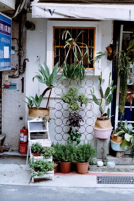 Taipei typical plants