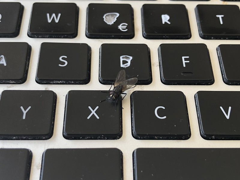 Fly on keyboard