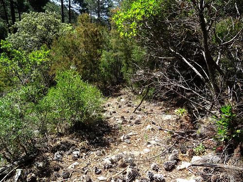 Le chemin de Paliri en RD du Peralzone après la traversée