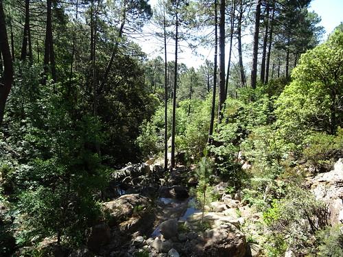 Le Peralzone en aval de la cascade (depuis le sommet)