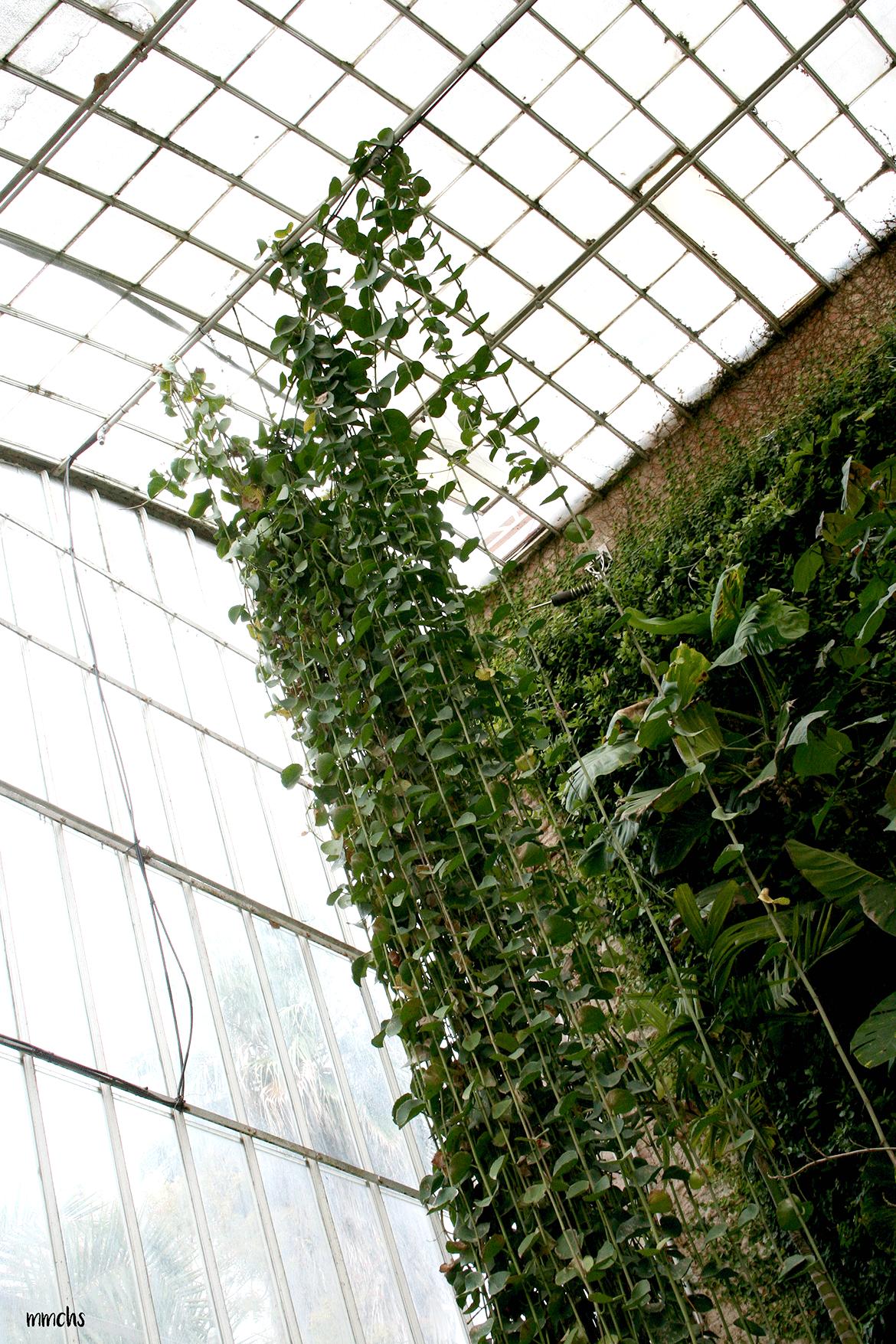 invernadero jardín botánico