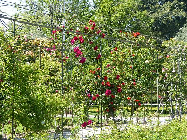roseraie nice
