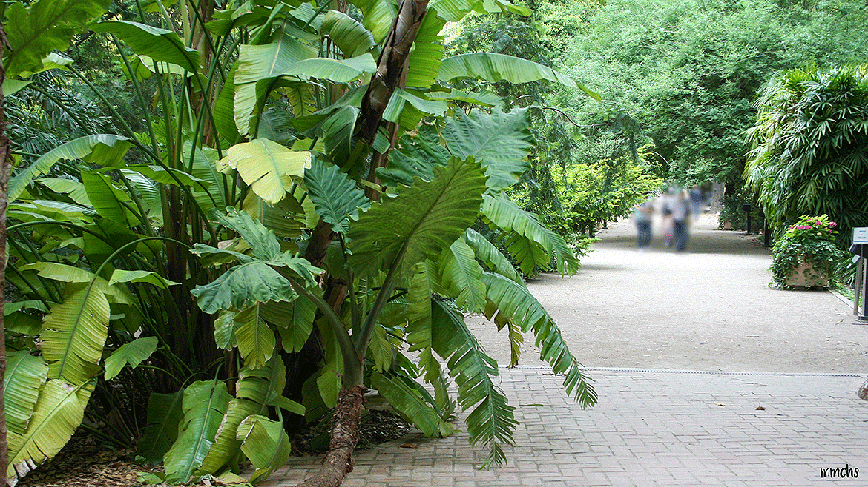 entrada jardín botánico Valencia