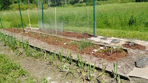 Row Garden - Perennial Flowers Planted