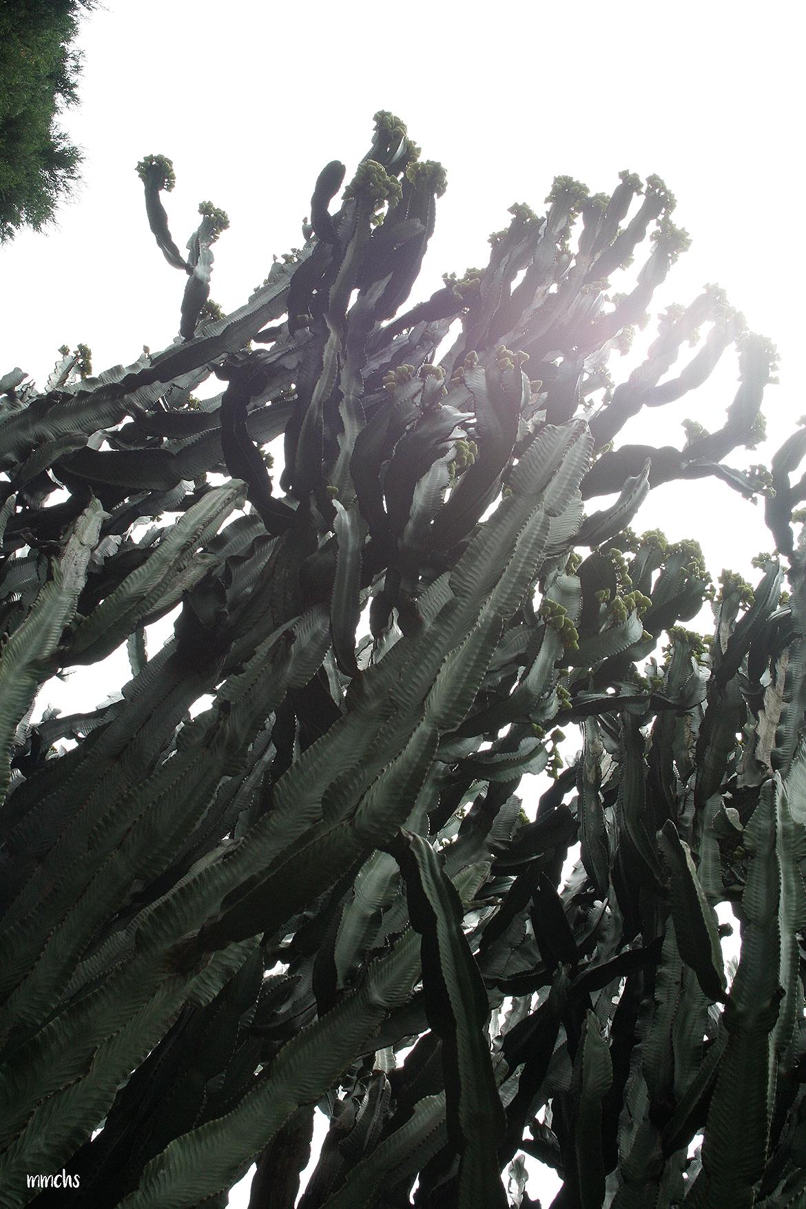 cactus jardín botánico Valencia