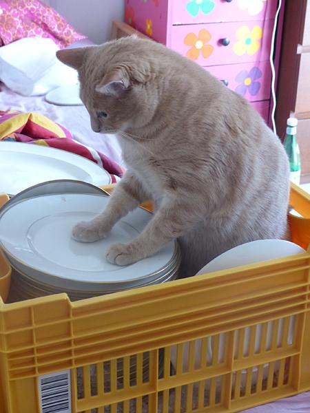 chat sur les assiettes