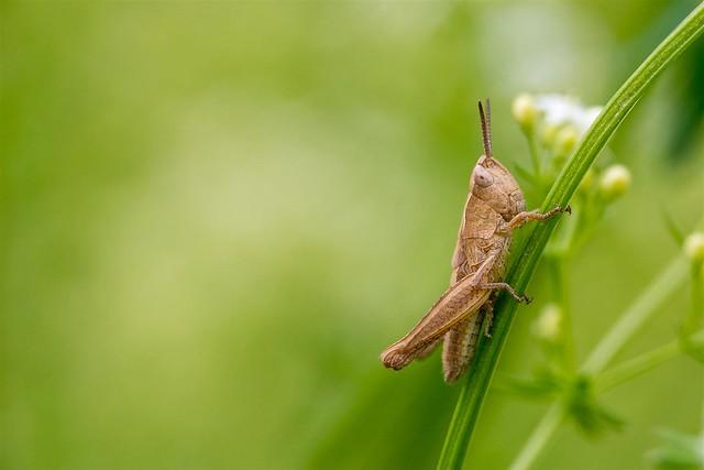 365 - Image 167 - Grasshopper...