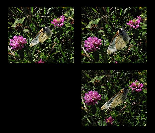 10 - Le printemps dans le fossé - Papillon