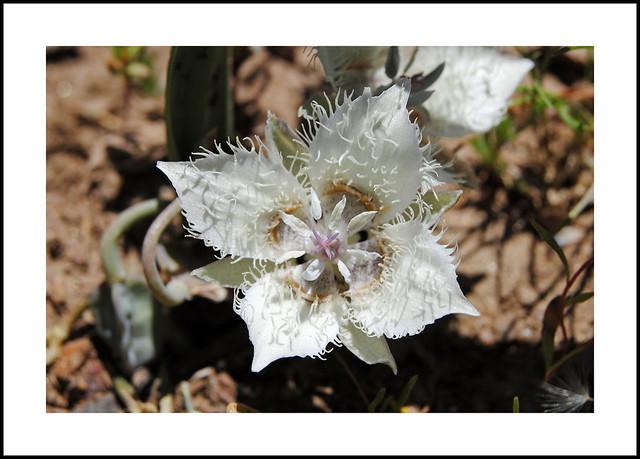 Shirley Meadows Wildflowers