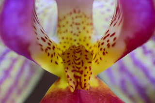Ultra macro orchid 16-6-19