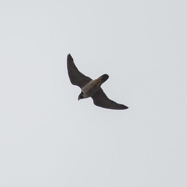 A new adult flies through