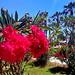 Mediterrean Summerflowers