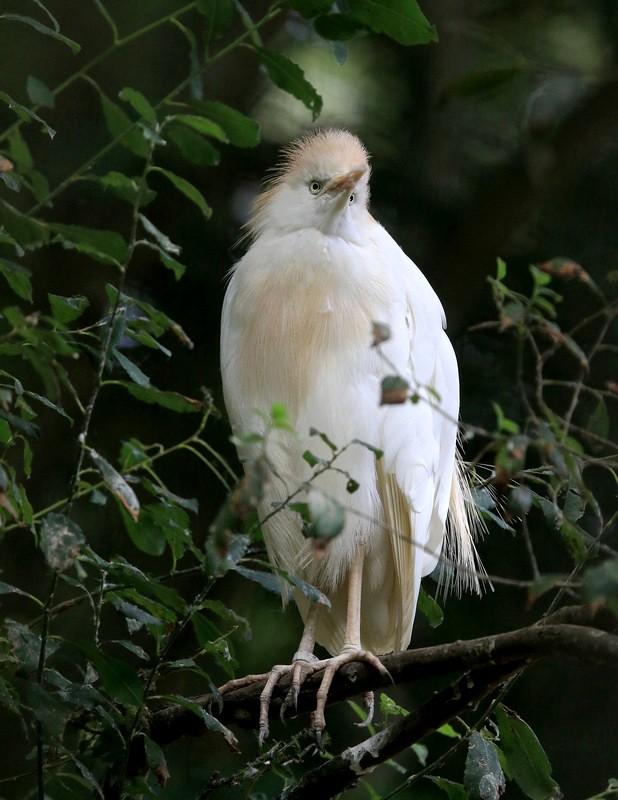 Portrait d'oiseaux - Page 2 48075720661_ae2c7ae8f4_b